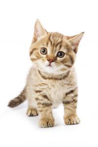 Aanschaf van een kitten | Dierenkliniek Kenaupark: www.dierenkliniekkenaupark.nl/aanschaf-kitten