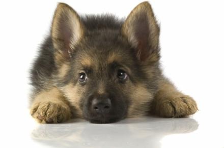 Een pup aanschaffen | Dierenkliniek Kenaupark